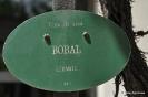 Bobal_1