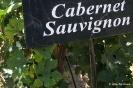 Cabernet Sauvignon_1