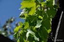Cultivos Frutales y Vid