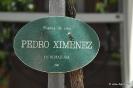 Pedro Ximenez_1