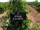 Petit Verdot_10