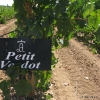 Petit Verdot_13