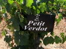Petit Verdot_17