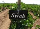 Syrah_1