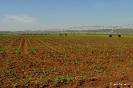 Plantas de maíz
