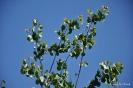 Árbol del amor_2