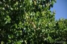 Árbol del amor_3