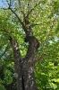 Árbol del amor_5