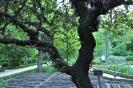 Árbol del Amor_6
