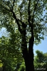 Árbol del amor_8