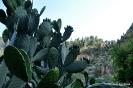 Cactus de ruta Bogarra Ayna