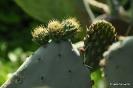 Cactus Exteriores