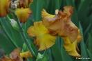 Iris Instant Smiles_2