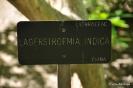 Kolkwitzia Amabilis_14