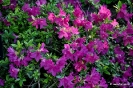 Jardinería, Flores y Jardines